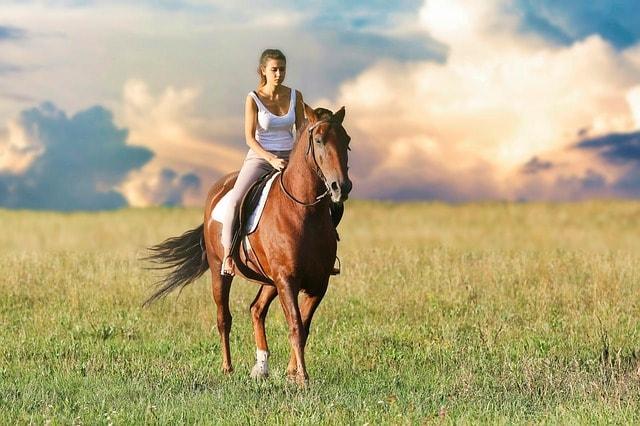 faire du stretching à votre cheval