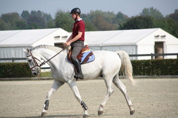 Monter à cheval : Conseils pratiques pour monter correctement