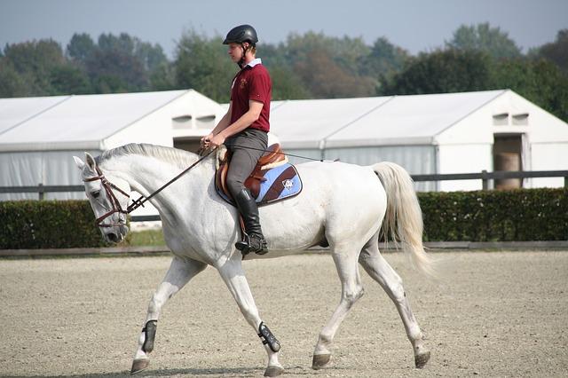 cavalier qui monte à cheval