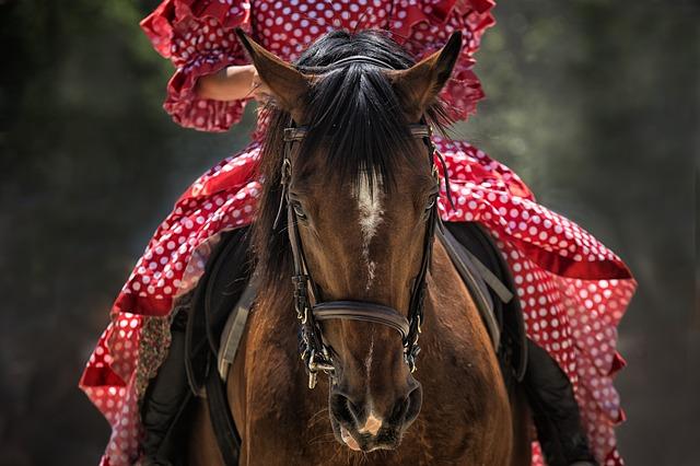 cavalier sur un beau cheval