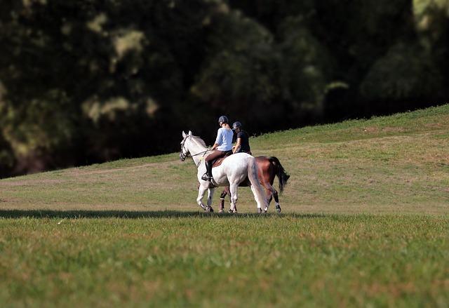 balade à cheval dans la montage