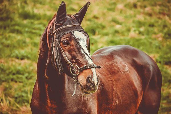 Compléments alimentaires pour chevaux qui améliorent sa peau et robe