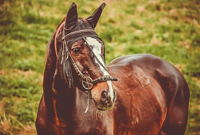 cheval en balade