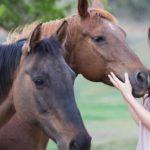 randonne-equestre-cheval-dordogne