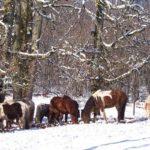 randonne-equestre-dordogne-cheval