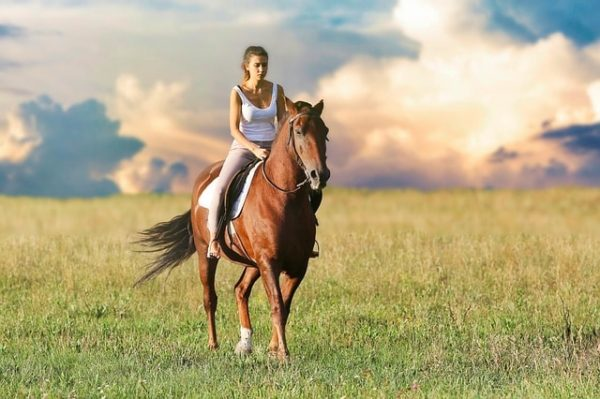Stretching équitation : Une posture importante pour le cheval
