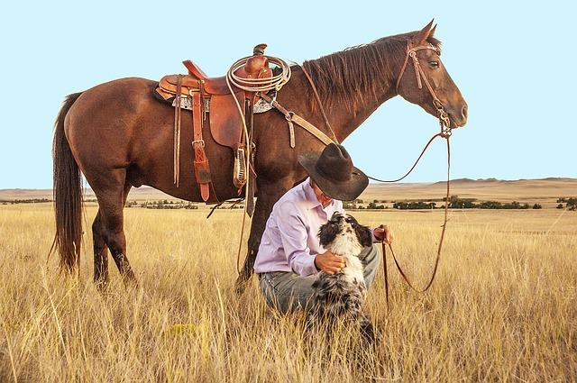 chien, cheval et cavalier dans une prairie