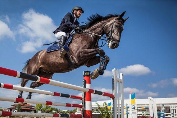 Le saut d'obstacles à cheval : la bonne position