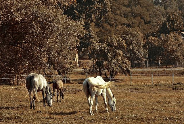 chevaux dans un paddock