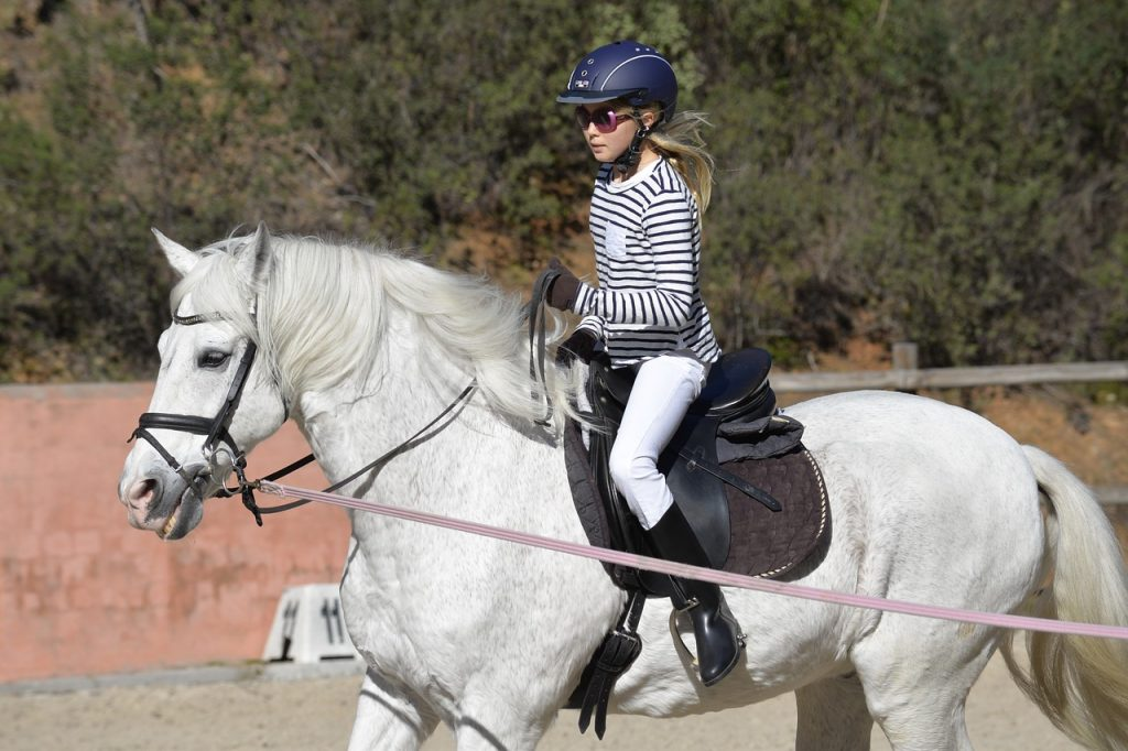 cheval en longe