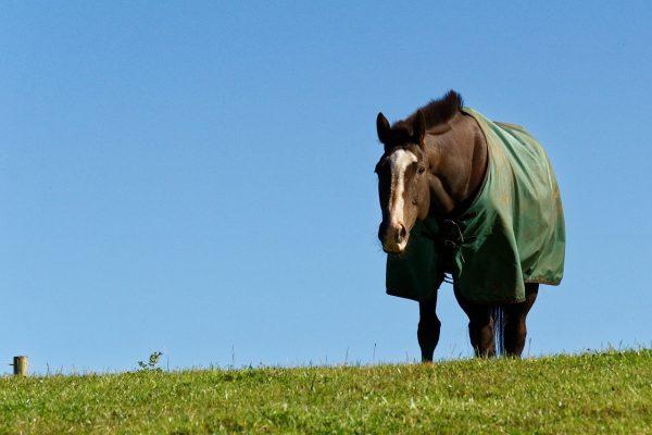 Couvertures cheval, chemises et couvres reins chevaux