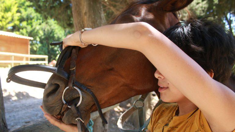 mors cheval choix